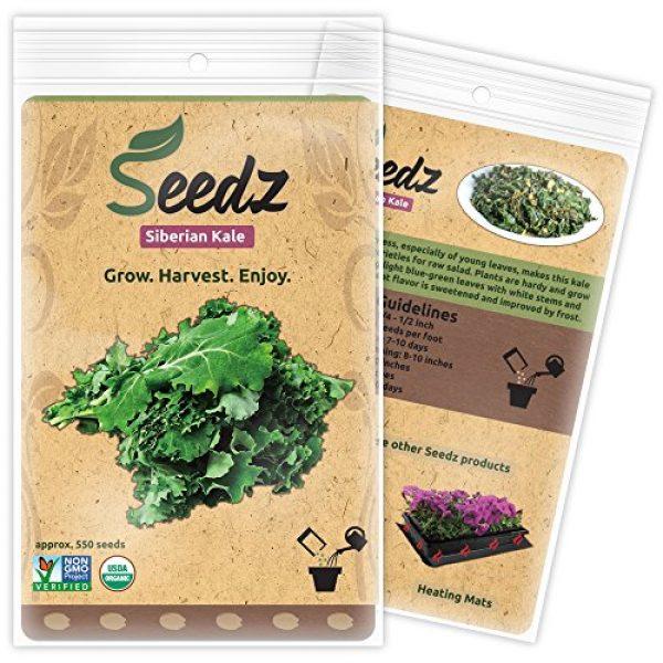 Seedz Organic Seed 1 Organic Kale Seeds, APPR. 550, Siberian Kale, Heirloom Vegetable Seeds, Certified Organic, Non GMO, Non Hybrid, USA
