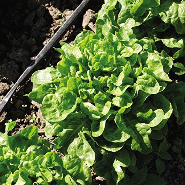 SEEDS OF CHANGE Organic Seed 4 Seeds of Change 04994 Organic Emerald Oak Lettuce