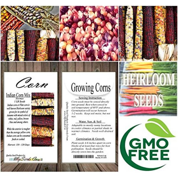 MySeeds.Co - VEGETABLE Seeds by the LB Heirloom Seed 7 1 lb (1,600+ Seeds) Indian Corn Seed - Oldest Varieties of Heirloom Corns - Non-GMO Seeds by MySeeds.Co (1 lb Indian Corn Mix)
