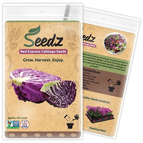 Seedz  1 Organic Cabbage Seeds