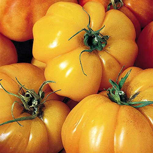 SEEDS OF CHANGE  4 Seeds of Change S10768 Certified Organic Marvel Striped Heirloom Tomato