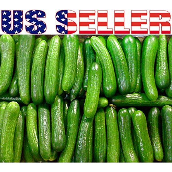 Harley Seeds Heirloom Seed 2 30+ Persian Beit Alpha (A.k.a. Lebanese) Cucumber Seeds Heirloom NON-GMO Crispy Fragrant From USA