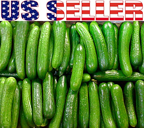 Harley Seeds  2 30+ Persian Beit Alpha (A.k.a. Lebanese) Cucumber Seeds Heirloom NON-GMO Crispy Fragrant From USA
