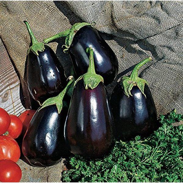 Burpee Organic Seed 3 Burpee Black Beauty (Organic) (Heirloom) Eggplant Seeds 50 seeds